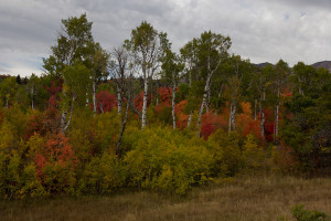 Overcast days even out the contrast and help your fall colors to pop